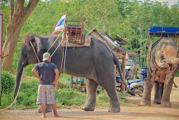 слоны пьют кофе
