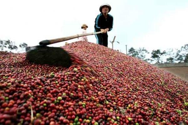 кофе Сальвадора