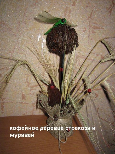 кофейное дерево стрекоза и муравей