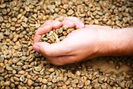 зеленый кофе против лишних килограммов средство