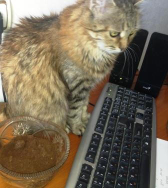 моя кошка  обожает кофейную гущу